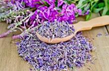 Какие лечебные свойства и противопоказания иван-чая?