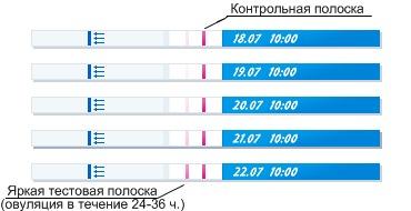 Как определить овуляцию по календарю, тесту и базальной температуре