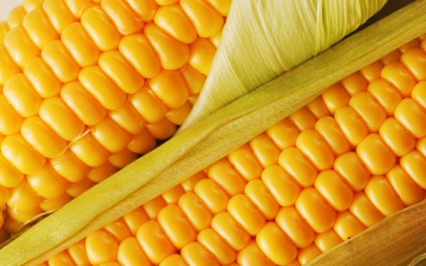 Как варить кукурузу. ответы на часто задаваемые вопросы
