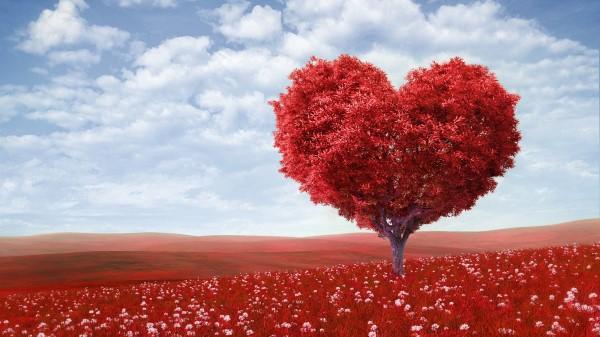 Картинки по запросу Как привлечь любовь в свою жизнь?