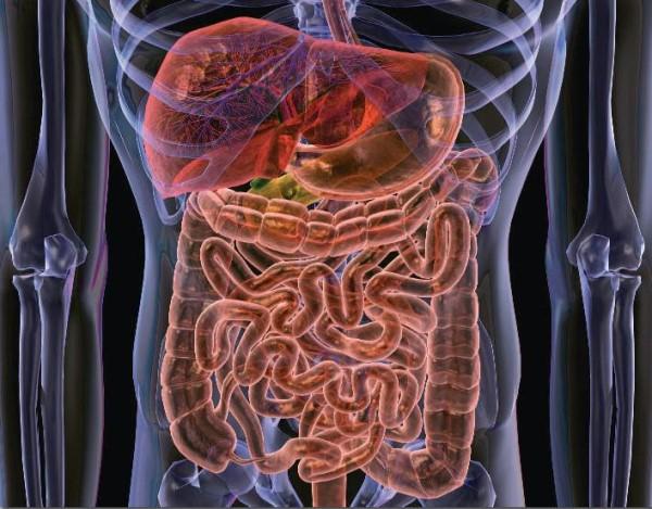 как почистить кишечник от паразитов