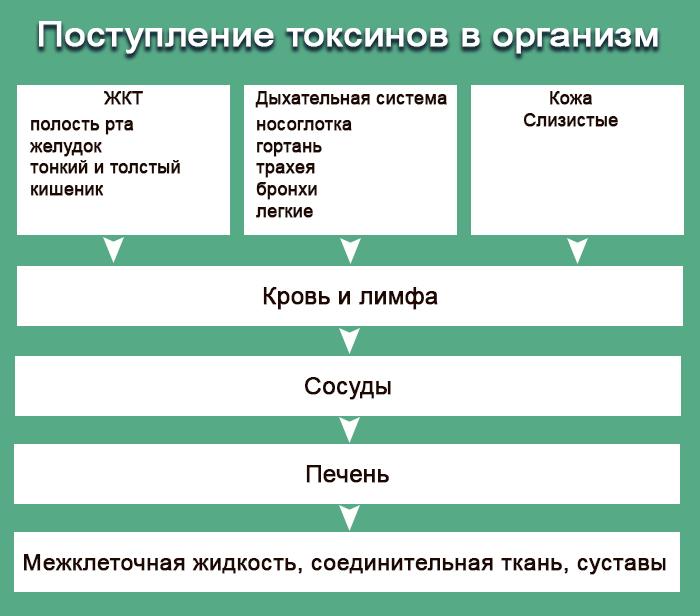 Поступление токсинов в организм