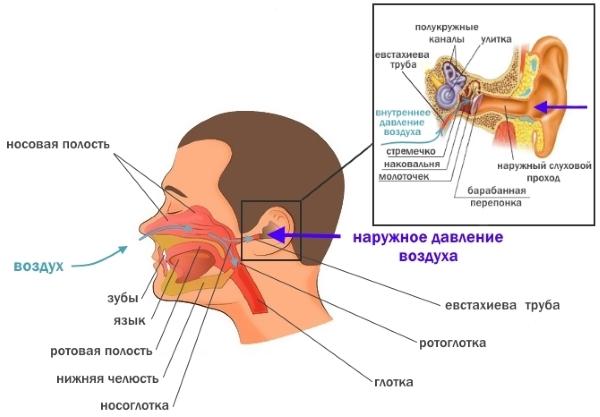 Вода в ушах. Причины, симптомы и признаки, удаление 31