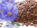 В чем заключаются польза и вред семян льна?